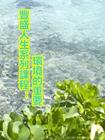 豐盛人生系列課程:環境的重要